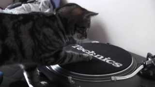 Turntable Thief