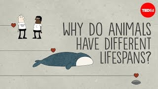 Why do animals have such different lifespans? - Joao Pedro de Magalhaes thumbnail