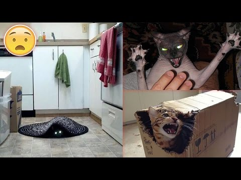 Pics Proving That Cats Are Actually Demons