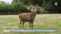 ANIMAUX & NATURE : En Indre-et-Loire, les animaux de la forêt ont leur domaine