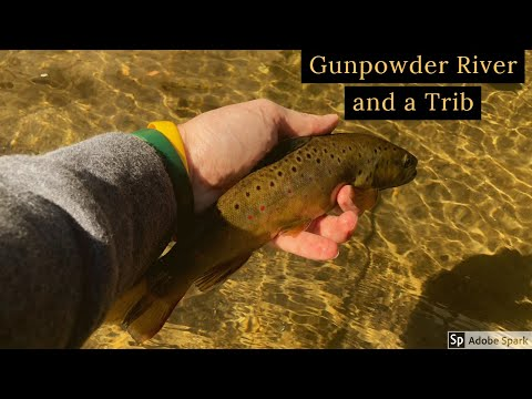 Fly Fishing The Gunpowder River And A Trib For Brown Trout
