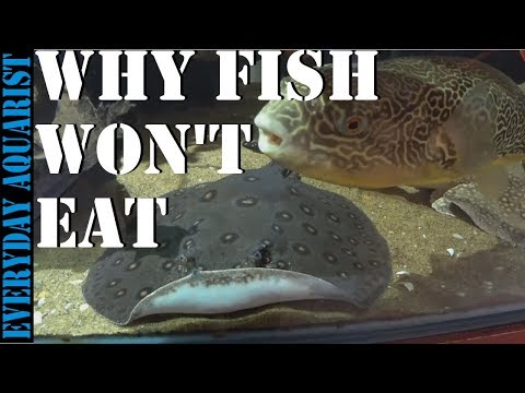 Why Your Aquarium Fish Are Not Eating Food