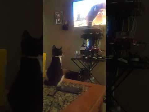 Kitty Neko watching Madagascar 2 on tv! Sooo cute