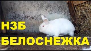 """Итоги Конкурса """"Имя для кролика"""""""