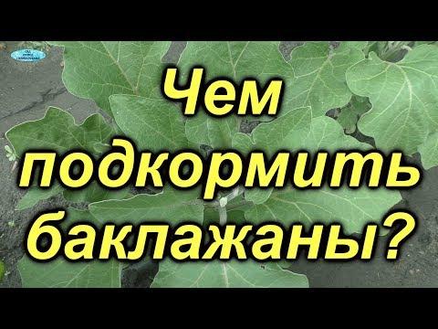 Подкормка баклажан для повышения урожая!   выращивание   подкормка   баклажаны   своими   руками   огород   когда   чем   сад