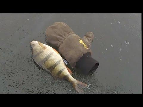 наша рыбалка видео окунь глухозимье 2