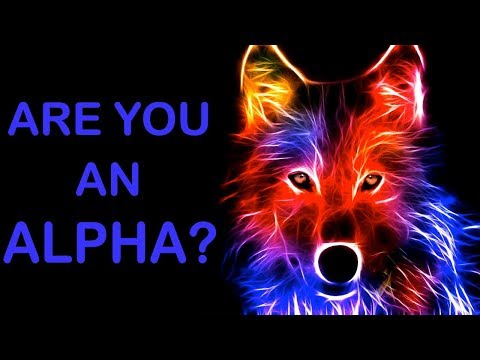 WHAT RANK IN A WOLF PACK WOULD YOU BE? Personality Test | Mister Test