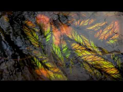 Strange Reflection By Quantum Dream