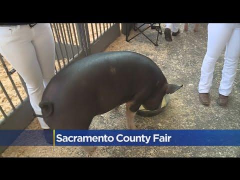 Sacramento County Fair Opens On Thursday