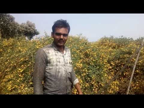 Redgram cultivation with drip irrigation farmer experience(1)