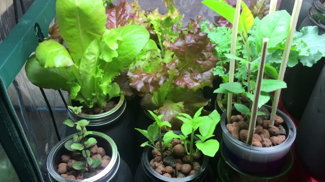 How I Grow My Plants With No Soil