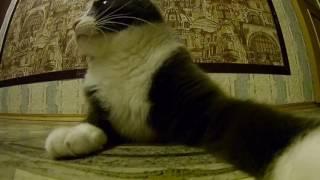 GoPro | Slow Motion | Cat and Dog  ||  Игривые будни кошки и собаки