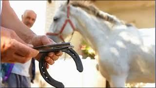 Мастерство подковки лошадей.  Мозаик