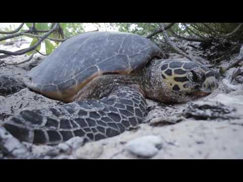 Buceando en las islas Seychelles