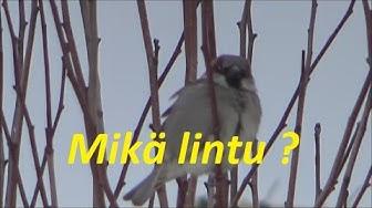 Mikä lintu ?