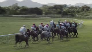 Vidéo de la course PMU PRIX DU NOUVEL AN
