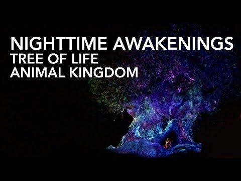 Tree of Life - Nighttime Awakenings - Animal Kingdom [4K]
