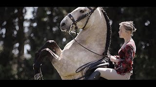 Rebecca Perroud | Horse Show