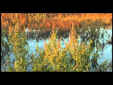 Discover the Klamath Basin National Wildlife Refuges
