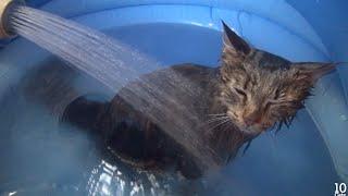 5 Cat's Bath Time. 5匹の猫のお風呂♨️