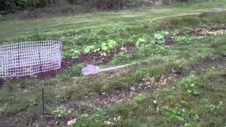 Building A Fence For Sugar Snap Peas - Chicken Coop Wire - Trellis Ideas