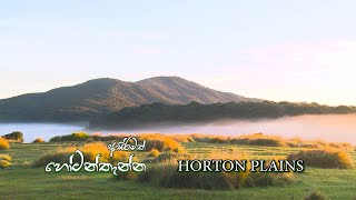 Horton plains | Programme 01 | 2019-06-02 | Rupavahini Documentary Thumbnail
