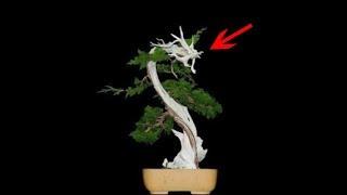 8 cây Bonsai chục tỷ ở Việt Nam