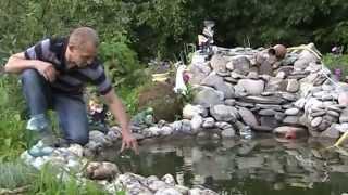 Меченосцы и Моллинезии в бассейне на даче