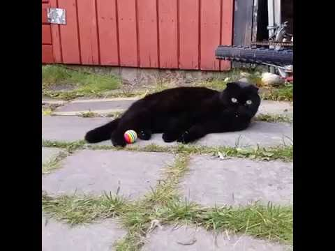 Black kitty cat plays with a ball