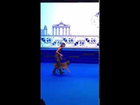 Heelwork to Music and Freestyle World Championships at WORLD DOG SHOW 2016, Moscow