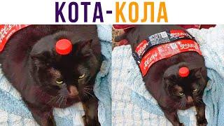 Кота-Кола))) Приколы с котами | Мемозг 636