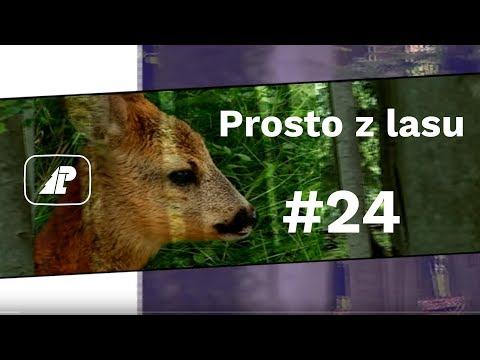 Prosto z lasu, odcinek 24/17