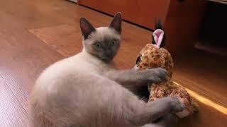 Cat vs Toy Lynx