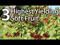 Our 3 Most Productive Soft Fruit Varieties of 2016