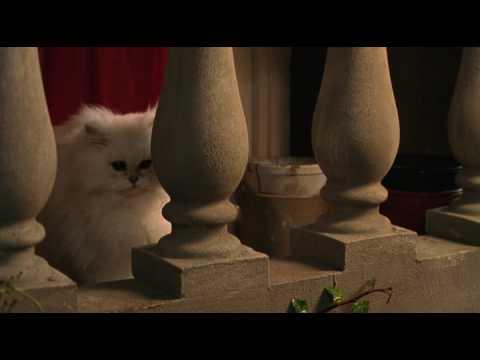 Смотреть мультфильм девушка кошка