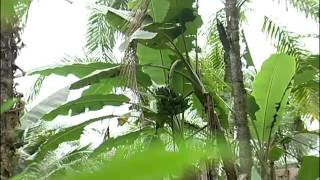 Region Pacifica De Colombia