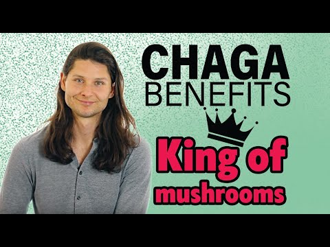 Chaga Benefits | ZippyHornbook