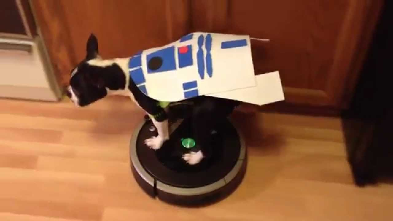 R2dog2 Dog Riding Roomba R2d2 Star Wars Costume Youtube