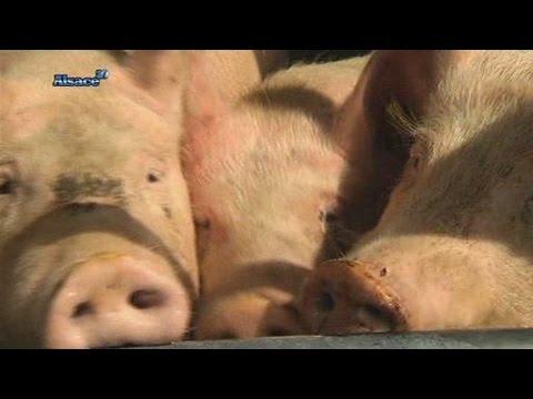 Terroir: le cochon est roi!