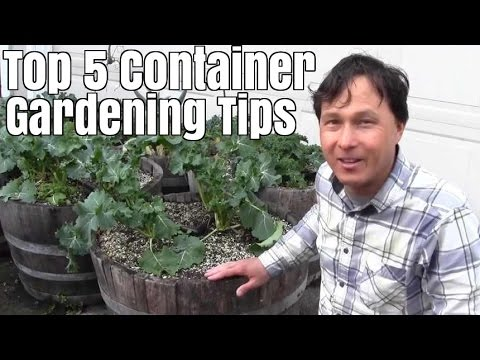Top 5 Container Gardening Tips