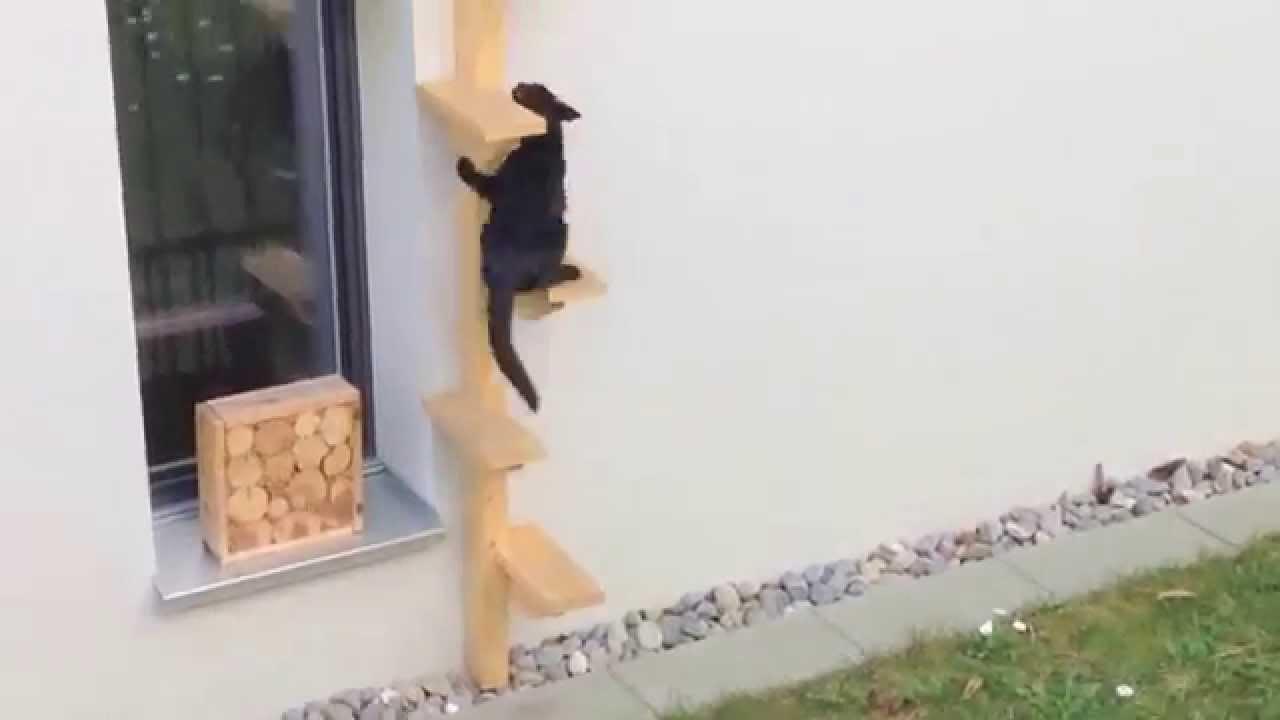 Kropf Holz Zurich ǀ Katzenleiter Youtube