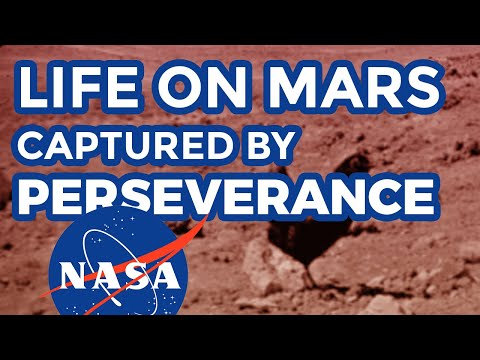 Life on Mars: real uncut NASA footage by Curiosity rover displaying life form on mars