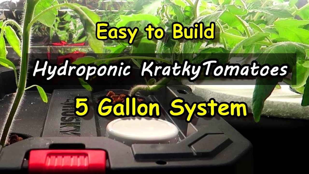 Easy System for Hydroponic Kratky Tomatoes - Indoor Growing