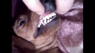 собака под молоком.mp4