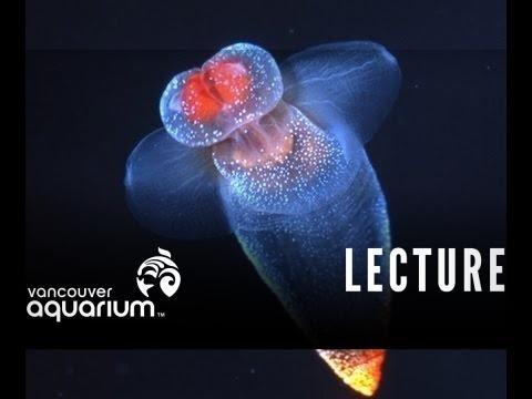 Arctic Marine Life Course (Plankton)