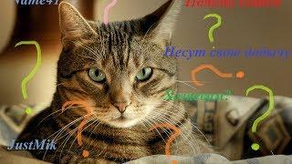 Почему кошки приносят свою добычу хозяевам? Just!