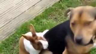 смешные котята видео   смешные котята и щенки   prikollar   kulgu 2015   кулгу   sjove killinger