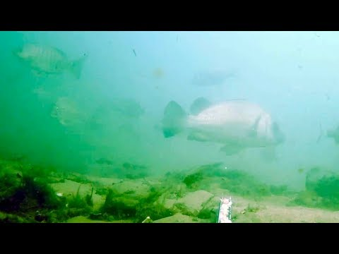 Underwater In Moreton Bay - Bongaree Jetty Bribie Island