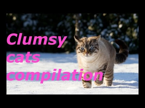Clumsy Cats **CUTE**