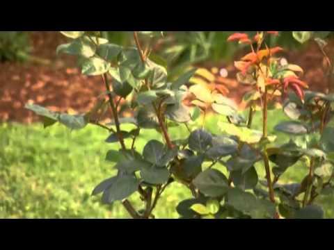 The Garden Gurus - Troforte in a Melbourne Garden